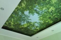 Натяжной потолок небо из леса