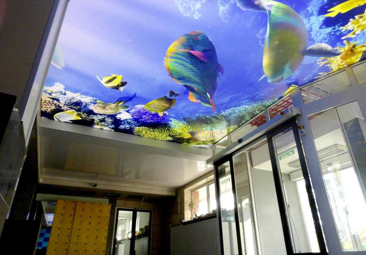 натяжной потолок аквариум